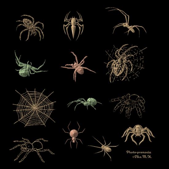 SpinnenTest