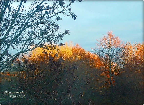 Sonne durch Novemberbäume