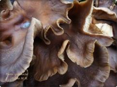 Rostige Pilze