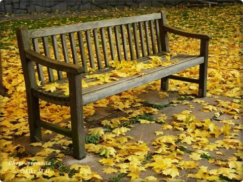 Yellow Blätter runt Bank