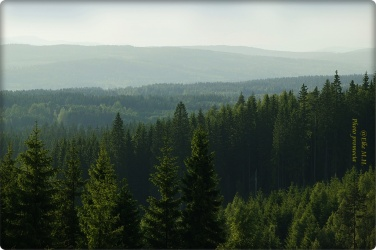 bergvikskog