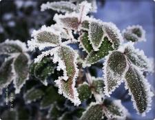 Nochmal Frost