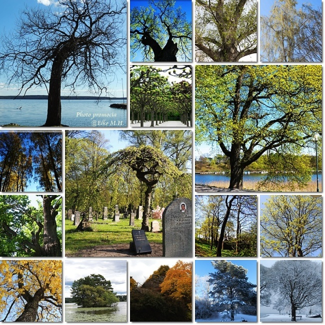 collage1baum